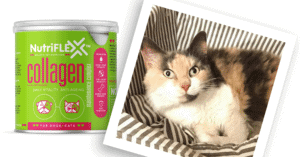 NutriFlex™ Hello Happiness with Pancake The Cat